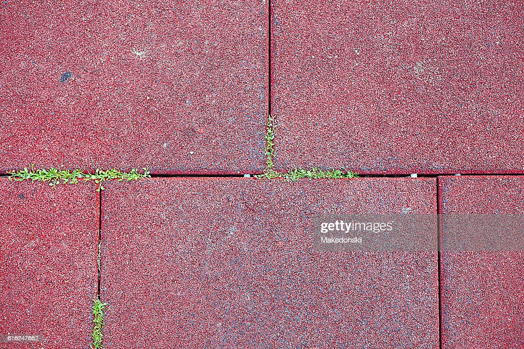 Paving slabs and grass. : Stock Photo