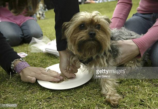 Paw print at MS Creations during Silver Spoon Hollywood Buffet for Dogs and Babies Day 1 April 22 2005 in Los Angeles California United States Photo...