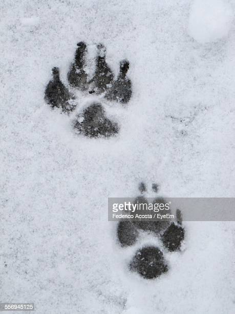 Paw Print On Snow Covered Field