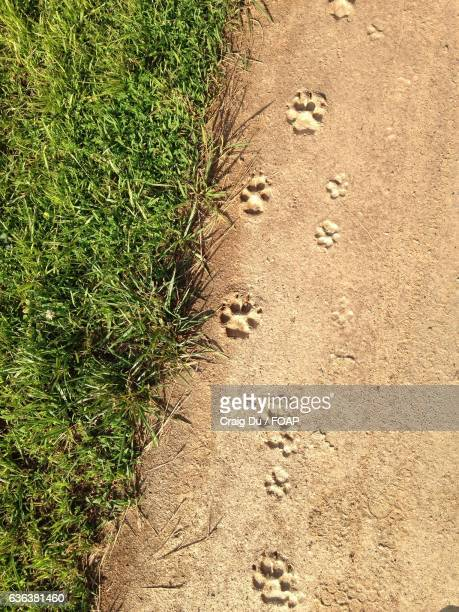 Paw prints on sand