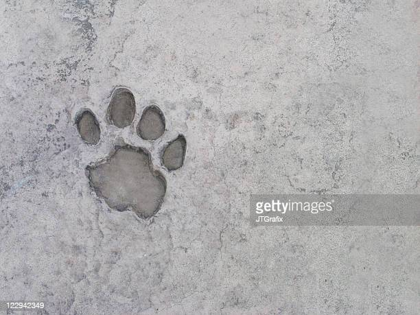 Pawprint in Concrete