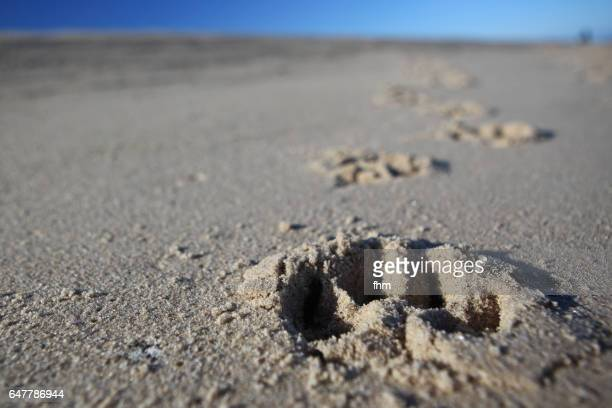 Pawprint of a dog in the sand on the beach
