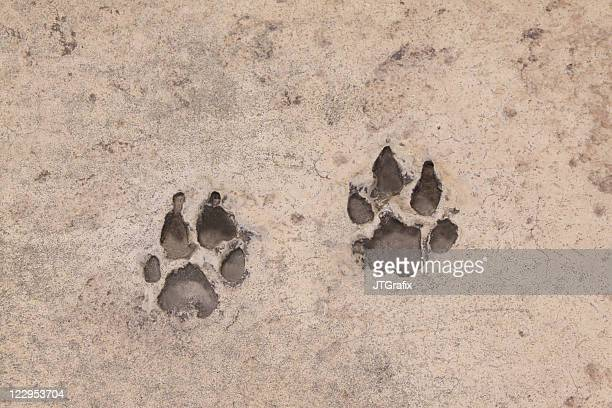 Pawprints in Concrete