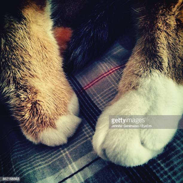 Paws Of Ginger Cat