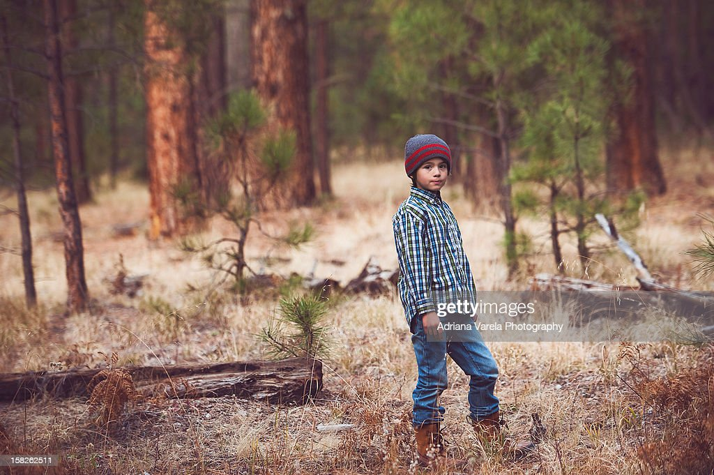 Peaceful forest : Stock Photo
