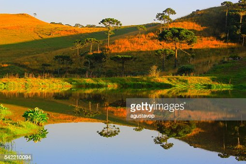 Peaceful lake reflection sunrise, araucarias, pampa countryside landscape, southern Brazil