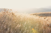 Warm sunlight shining on a peaceful mountain meadow with copy space (stock image)