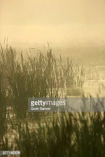 Peaceful wetlands : Stock Photo