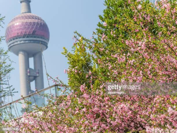 peach blossom with urban architecture,detail shot of Shanghai landmarks