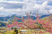Peach tree and mountain