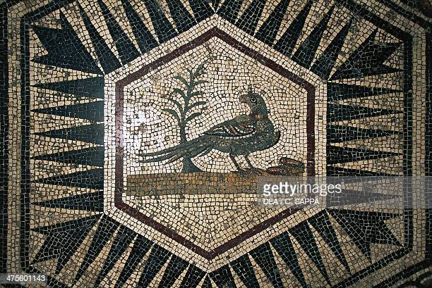 Peacock detail from the mosaic floor of the Villa del Pavone archeologica site of Puymin VaisonLaRomaine ProvenceAlpesCote d'Azur France Roman...