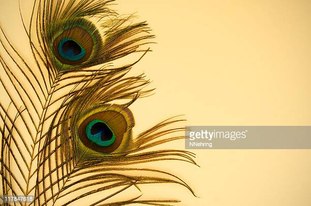 peacock feathers on beige paper