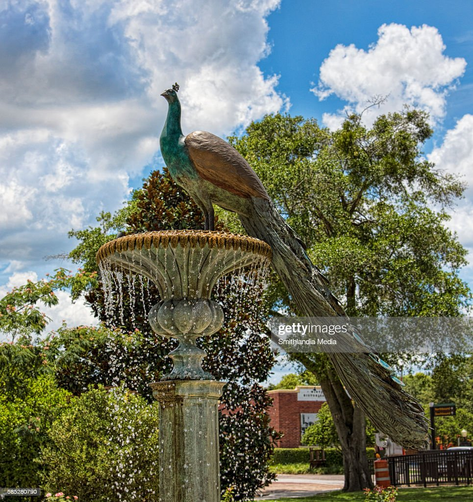 peacock fountain in winter park florida pavo cristatus stock photo