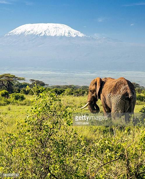 Peak of the Mt Kilimanjaro