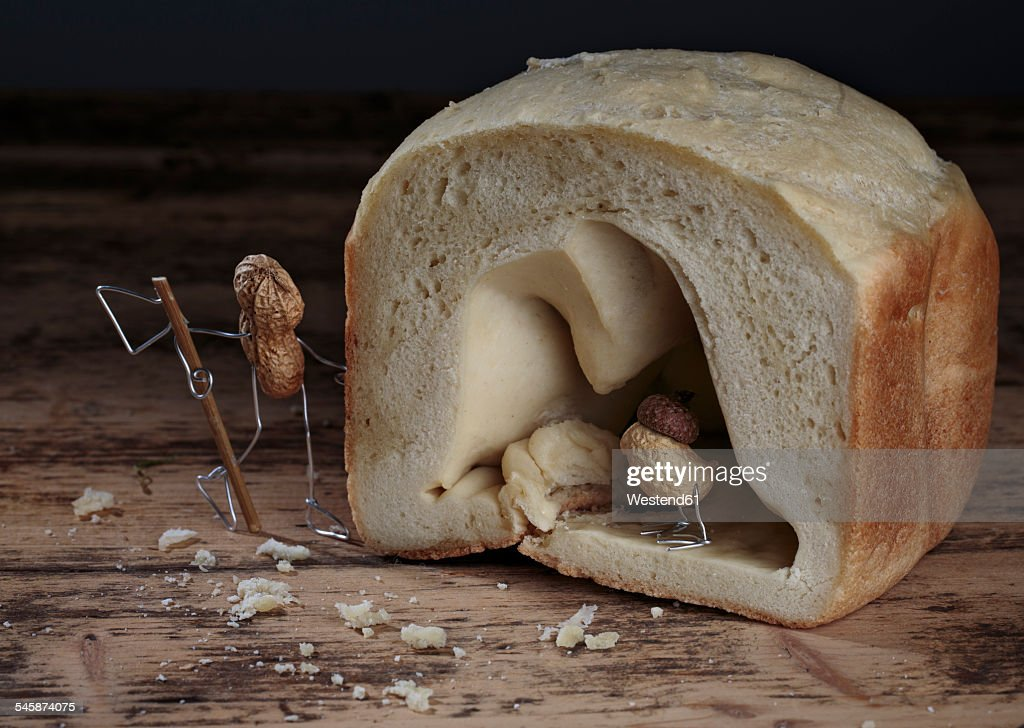 Peanut bird hiding in bread cave, hunter waiting outside