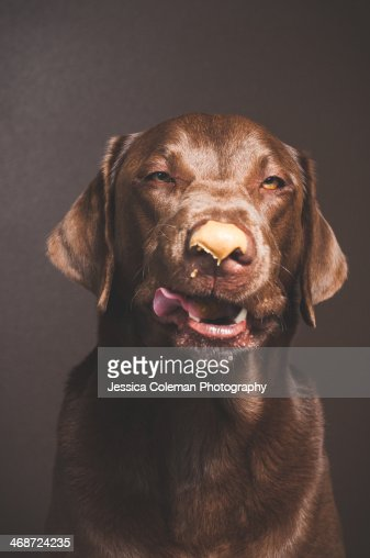 Peanut Butter and Chocolate : Stock Photo