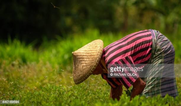 Peanut harvesting event