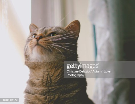 peanut : Stock Photo
