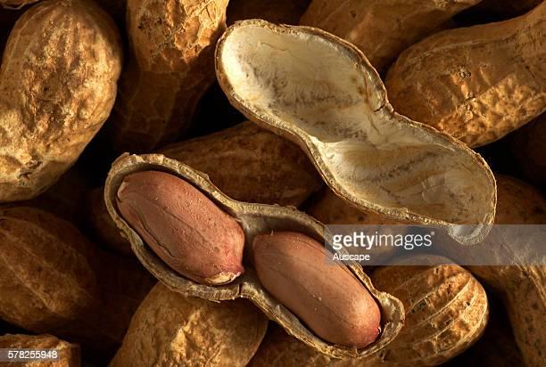 Peanuts Arachis hypogaea roasted Native to South America