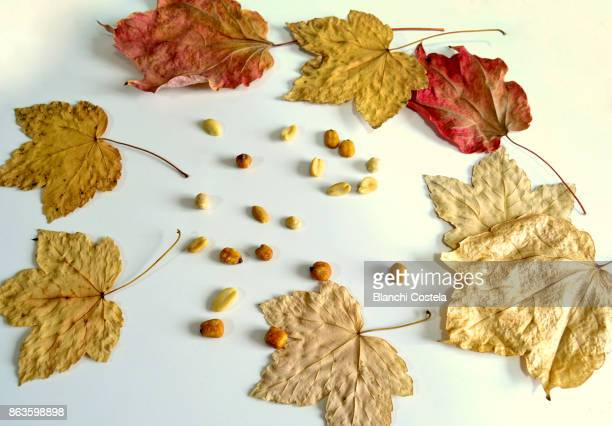 Peanuts on a table with decorative autumn leaves