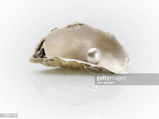 pearl and oyster shells