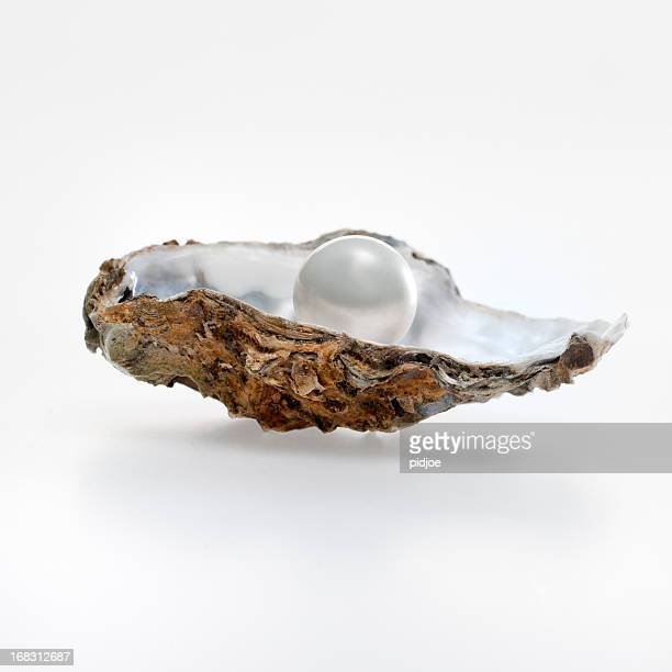 pearl in der oyster shell
