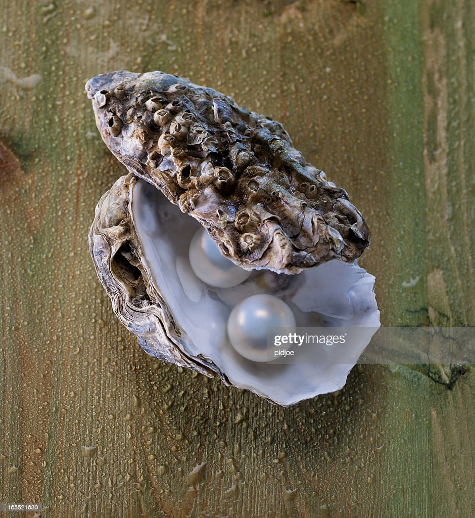 pearls in oyster shell