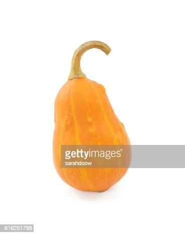 Pear-shaped orange ornamental pumpkin : Foto de stock