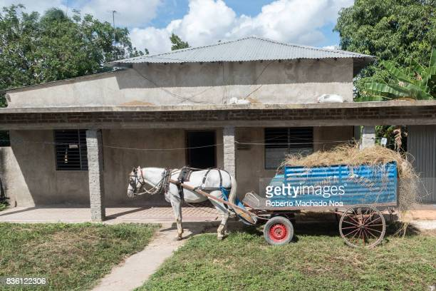 Peasant lifestyle scene A white horse pulls with blue cart loaded with hay and dry grass