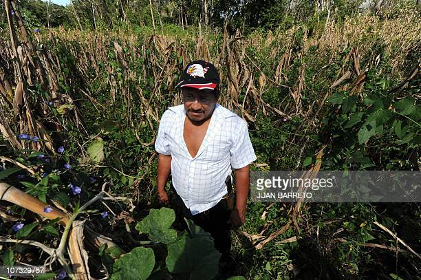 A peasant stands in the middle of a dried corn field around the village of Felipe Carrillo Puerto in the Mexican state of Quintana Roo on December 3...