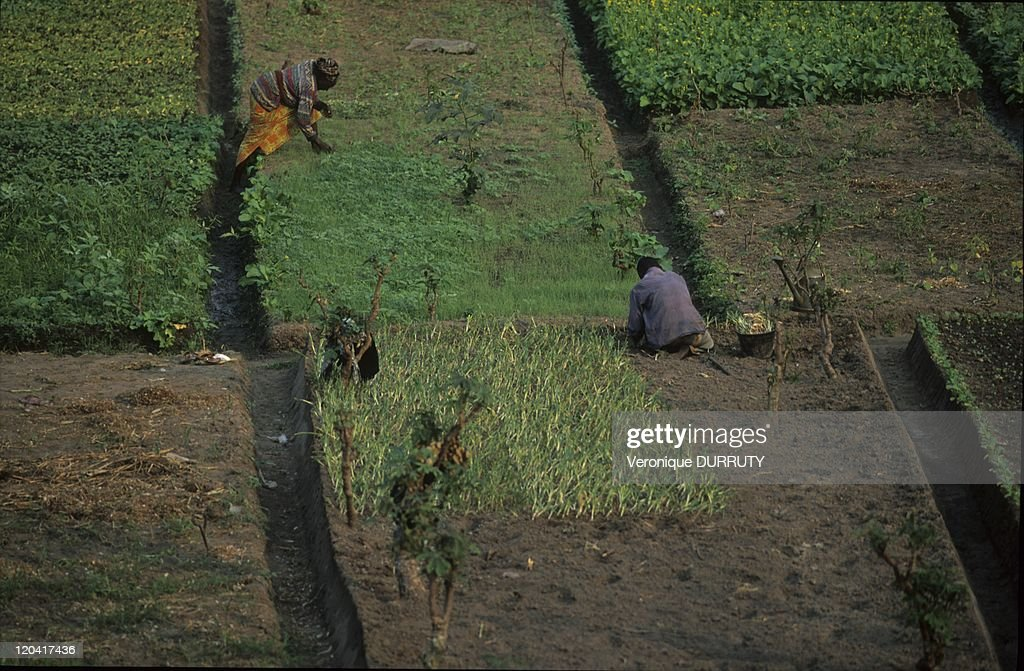 Peasants Working On The Fields Near Brazzaville In Congo