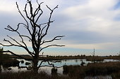 peat lake and dead trees, picture taken in the Netherlands, state Drenthe Dwingeloo