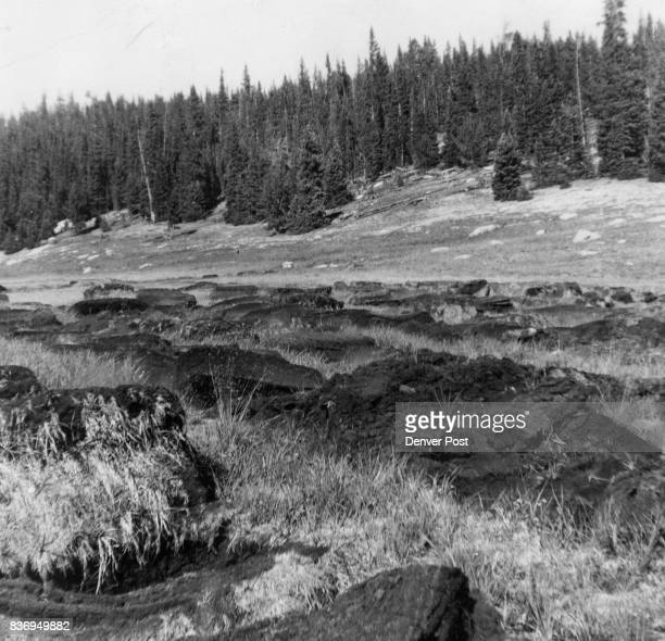Peat Moss Lies in Mountain Meadow Park Near Aspen to Dry in the sun Credit The Denver Post