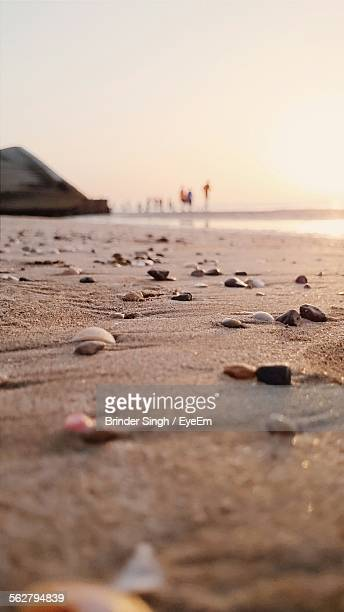 Pebbles And Shells At Beach