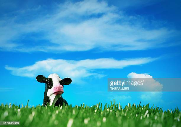 peck a boo cow