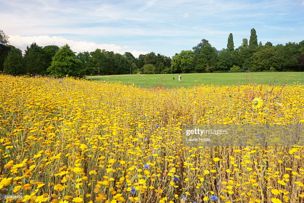 Peckham rye common, Peckham, London