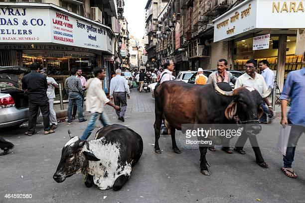 Pedestrians walk past cows in the street in the Zaveri Bazaar area in Mumbai India on Thursday Feb 26 2015 India's Finance Minister Arun Jaitley will...