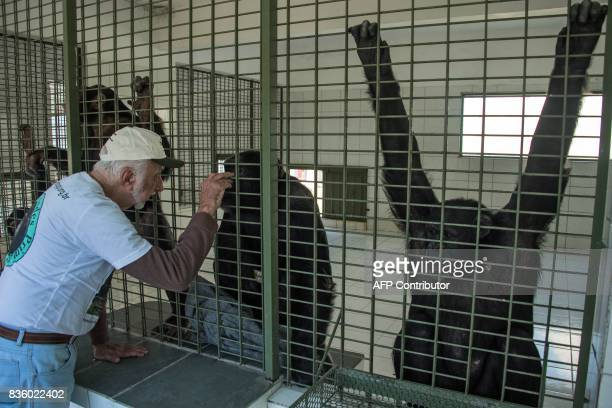 Pedro Ynterian President of the Great Apes Project interacts with a chimpanzee at a sanctuary for apes in Sorocaba some 100km west of Sao Paulo...