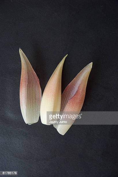 Peeled Myoga, or Japanese ginger on black plate