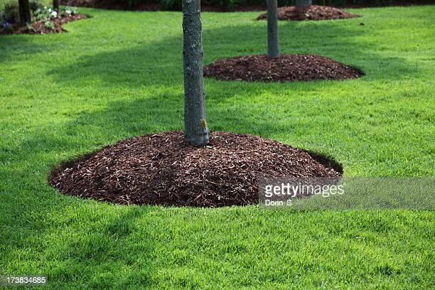Pefect Lawn