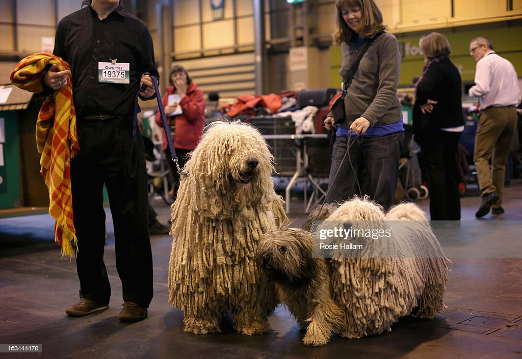 Peggy and Furge, Hungarian Puli and Agatha, a Hungarian Komondor with their owners Isobel and Kim Sears, get ready to show during the final day at Crufts Dog Show on March 10, 2013 in Birmingham, England. During this year's four-day competition over 22,000 dogs and their owners will vie for a variety of accolades but ultimately seeking the coveted 'Best In Show'.