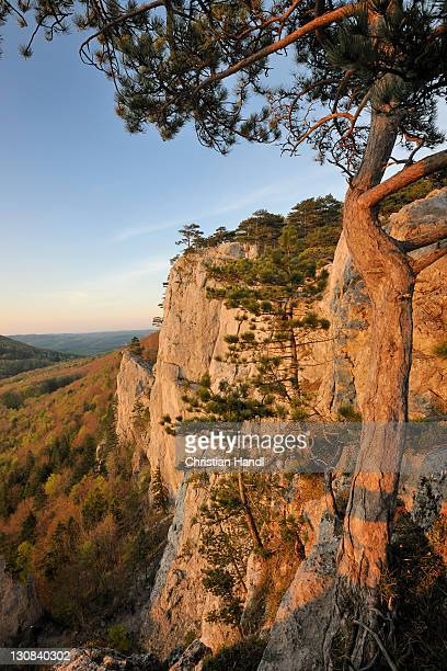 Peilstein mountain faces in the evening light, Triestingtal valley, Lower Austria, Austria, Europe