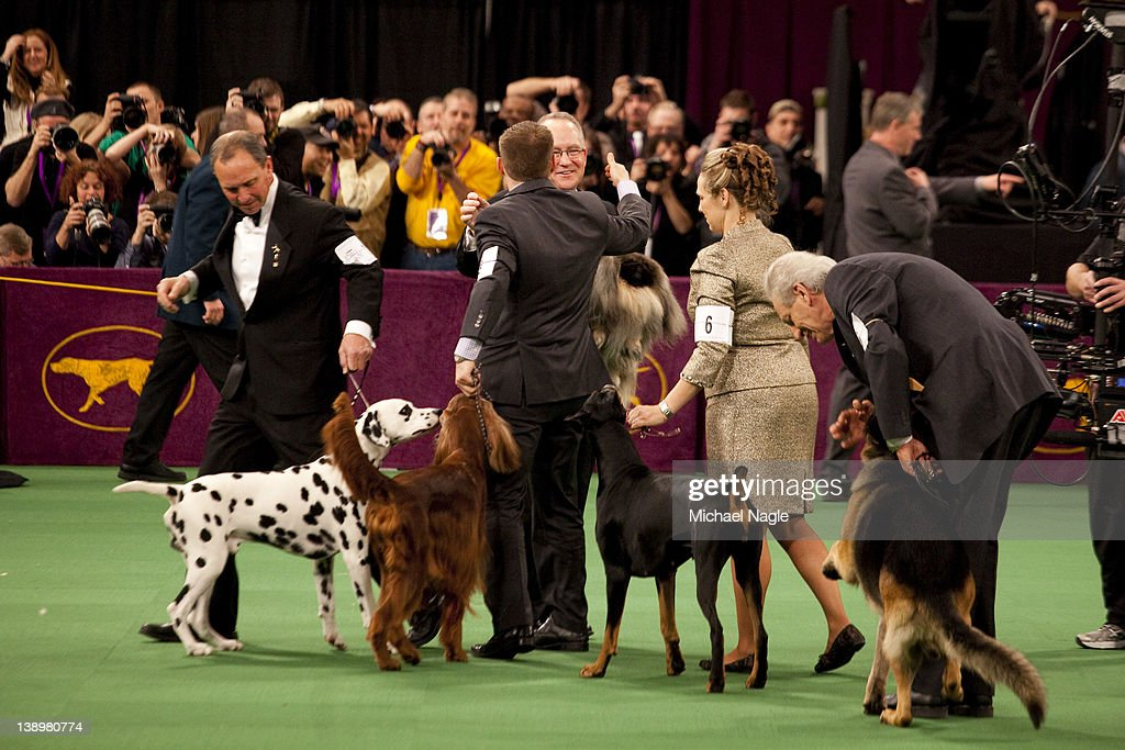 Pekingese Malachy carried by David Fitzpatrick, co-owner and handler, are congratulated by runners up after they win Best in Show at the Westminster Kennel Club Dog Show on February 14, 2012 in New York City. The Westminster Kennel Club Dog Show was first held in 1877, is the second-longest continuously held sporting event in the U.S., second only to the Kentucky Derby.