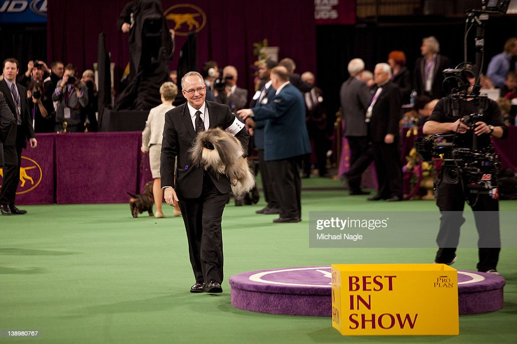 Pekingese Malachy is carried by David Fitzpatrick, co-owner and handler, after winning Best in Show at the Westminster Kennel Club Dog Show on February 14, 2012 in New York City. The Westminster Kennel Club Dog Show was first held in 1877, is the second-longest continuously held sporting event in the U.S., second only to the Kentucky Derby.