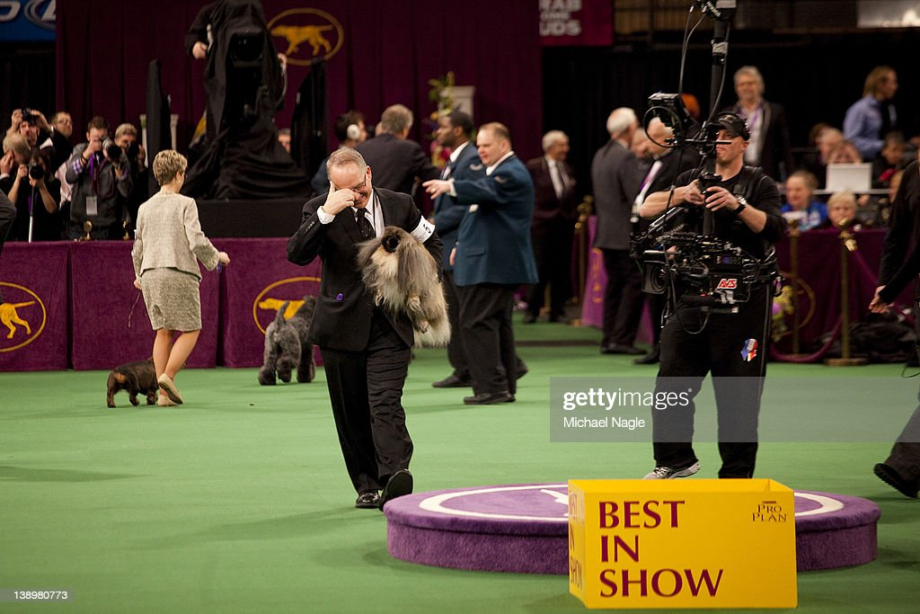 Pekingese Malachy is carried by David Fitzpatrick, co-owner and handler, after they won Best in Show at the Westminster Kennel Club Dog Show on February 14, 2012 in New York City. The Westminster Kennel Club Dog Show was first held in 1877, is the second-longest continuously held sporting event in the U.S., second only to the Kentucky Derby.