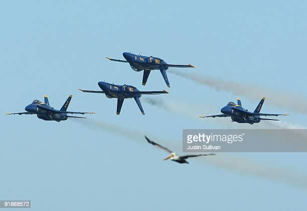 A pelican appears to be flying if formation with US Navy Blue Angels F/A18 Hornets during a practice performance ahead of the Fleet Week air show...