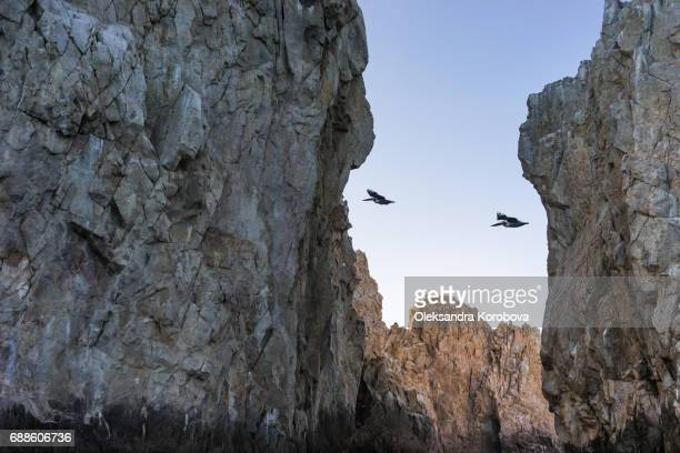 Pelican flying over the rock formations around the Arch in Cabo San Lucas, Mexico at sunset.
