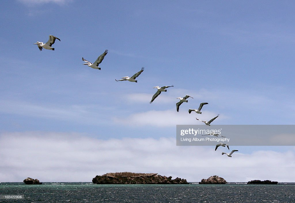Pelican Island flying sequence