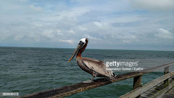 Pelican Perching On Railing Over Sea Against Sky