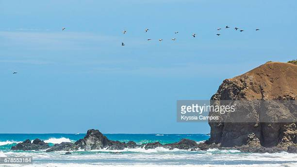 Pelicans flying above Big Rock on the beach, Guanacaste - Costa Rica